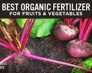 Free Sample Of Best Organic Liquid Fertilizer By Mail